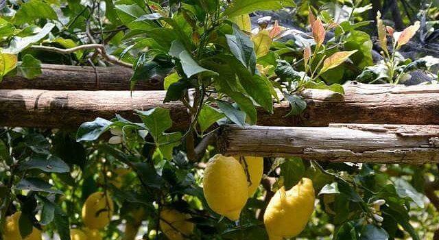 Lemon Tour Amalfi – O Excursie Cu Aromă și Miros De Lămâie!